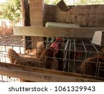 production of eggs with hens... | Shutterstock . vector #1061329943