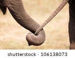 Asian Elephant Couple Embracin...