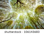 Trees in the forest - the crown of leaves against the sky - stock photo
