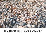 close up colorful seashell ... | Shutterstock . vector #1061642957