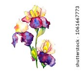 colorful irises. floral...   Shutterstock . vector #1061667773