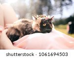 Stock photo girl lying on grass with cat on chest spring or summer warm weather concept bokeh background 1061694503