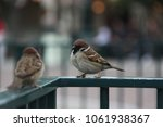 cute couple birds are on the... | Shutterstock . vector #1061938367