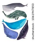 whales illustration raster set. ... | Shutterstock . vector #1061947853