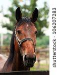 beautiful brown horse looking | Shutterstock . vector #106207283