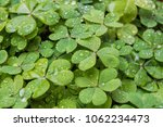 Background With Clover Leaves...