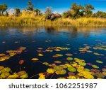 elephant in the river okavango... | Shutterstock . vector #1062251987