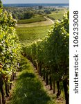 View on the famous wine route in Alsace France - stock photo