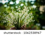 a bouquet of lilies of the... | Shutterstock . vector #1062538967