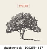 high detail vintage... | Shutterstock .eps vector #1062594617