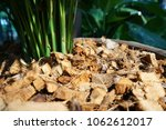 selective focus of  coconut...   Shutterstock . vector #1062612017