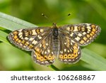 The Marsh Fritillary, Euphydryas aurinia, is a butterfly of the Nymphalidae family. - stock photo