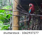 a south american scarlet macaw... | Shutterstock . vector #1062937277