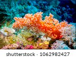 underwater coral closeup scene. ... | Shutterstock . vector #1062982427