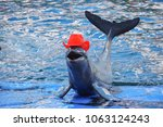 orcaella brevirostris showing... | Shutterstock . vector #1063124243