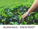women's hand collects the green ... | Shutterstock . vector #1063133657