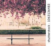 cherry blossoms in paris in...   Shutterstock . vector #1063136483