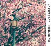 cherry blossoms in paris in...   Shutterstock . vector #1063136507