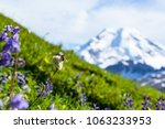 mount baker with meadow in... | Shutterstock . vector #1063233953