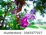 beautiful purple orchid in... | Shutterstock . vector #1063377317