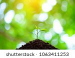 the seedling are growing in the ... | Shutterstock . vector #1063411253