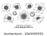 flower drawings.  collection of ... | Shutterstock .eps vector #1063450553