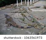 wide shot a slaughter of... | Shutterstock . vector #1063561973