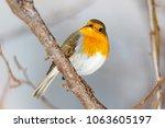 robin  erithacus rubecula ....   Shutterstock . vector #1063605197