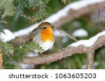 robin  erithacus rubecula ....   Shutterstock . vector #1063605203