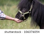 Black pony eating from hand - stock photo