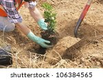 Workers planting tree - stock photo