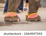thai's elephants  body paint ...   Shutterstock . vector #1064047343