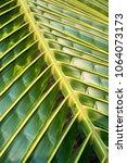 coconat leaf texture bakground | Shutterstock . vector #1064073173