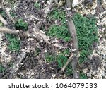 Water Fern And Duck Weed On Th...