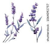 violet lavender. floral...   Shutterstock . vector #1064092757