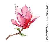 pink magnolia. floral botanical ...   Shutterstock . vector #1064096603