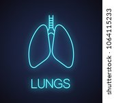 human lungs with bronchi and... | Shutterstock .eps vector #1064115233