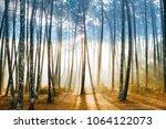fabulous european forest. ... | Shutterstock . vector #1064122073