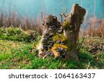 Close Up Tree Trunk With...