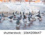 Pigeons On A Wet City Square I...