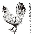 vector rooster illustration.... | Shutterstock .eps vector #1064244233