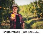 farmer man harvesting oranges...   Shutterstock . vector #1064288663