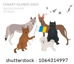 dogs by country of origin.... | Shutterstock .eps vector #1064314997