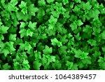 beautiful texture of green... | Shutterstock . vector #1064389457