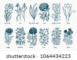 garden plants. hand drawn... | Shutterstock .eps vector #1064434223
