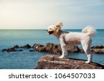 dog so cute beige color mixed...   Shutterstock . vector #1064507033