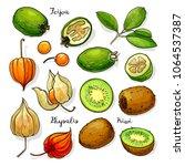 set of vector fruits  feijoa ... | Shutterstock .eps vector #1064537387
