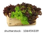 assorted lettuce in a wooden box on a white background - stock photo