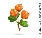 forest berries isolated on... | Shutterstock .eps vector #1064657723