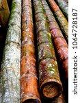 Small photo of Guadua Bamboo logs
